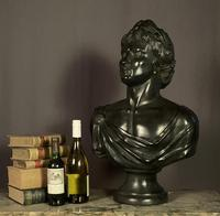 Large Bronzed Plaster Library Bust Appollo (2 of 9)