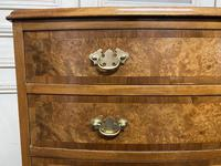 Burr Walnut Bow Front Chest (4 of 12)
