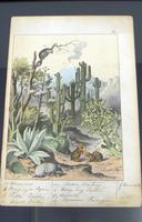 6 Framed Animal Coloured Pictures Plates C1877 Sketches from Nature - N America & Canada (6 of 12)