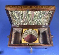 William IV Rosewood Tea Caddy (3 of 13)