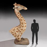 Rare And Extremely Well Prepared Late 20th Century Taxidermy African Bull Giraffe (2 of 14)