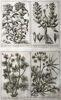 Unique Original French 18th Century Botanical Copperplate Prints (3 of 7)
