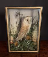 Decorative Cased Taxidermy Barn Owl (10 of 10)