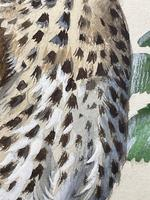 """Watercolour """"Chirping Song Thrush Bird"""" Signed Charles Frederick Tunnicliffe OBE RA 1901-1979 (14 of 35)"""