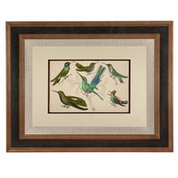 Hand Coloured 'Glorious Hummingbird' Lithograph. Goldsmith 1875 (4 of 4)