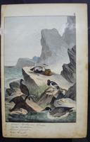 6 Framed Animal Coloured Pictures Plates C1877 Sketches From Nature - N Europe & Lapland (8 of 11)