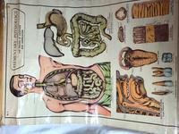Vintage Medical Anatomical Elementary Physiology Chart Poster Early Arnold No 5 (10 of 19)