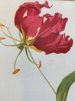 Beautiful 'Gloriana Rothschildiana' Rare Chromolithograph 1903 (4 of 4)