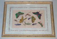 Fine Antique Pair of Chinese Paintings Butterflies & Insects on Pith (7 of 10)