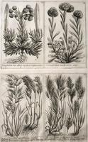 Unique Original French 18th Century Botanical Copperplate Prints (2 of 7)
