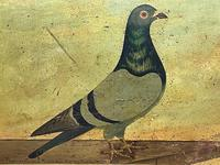 Decorative Sporting Early 20th Century Oil Canvas Painting English Racing Pigeon (5 of 35)