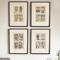 Unique Original French 18th Century Botanical Copperplate Prints