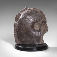 Large Antique Decorative Ammonite, English, Fossil, Geological Ornament c,1910 (2 of 12)