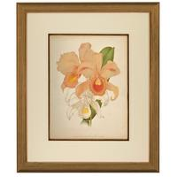 Magnificent Cattleya Trianae Orchid Chromolithograph. Robinson. 1871-1881 (2 of 3)