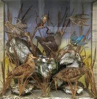 Taxidermy Edwardian Case of 7 Birds Inc: Kingfisher, Snipe, Moorhen & Woodcock (15 of 15)