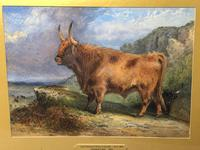 Victorian Scottish Highland Painting of Cattle by Aster Richard Chilton Corbould (11 of 40)