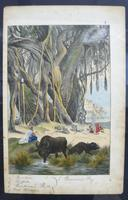 6 Framed Animal Coloured Pictures Plates C1877 Sketches from Nature - India (6 of 14)