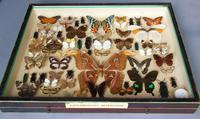 Large Antique Specimen Butterfly & Insect Case (9 of 10)