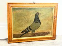 Decorative Sporting Early 20th Century Oil Canvas Painting English Racing Pigeon (29 of 35)