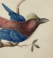 Watercolour of Bird (2 of 4)