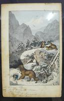 6 Framed Animal Coloured Pictures Plates C1877 Sketches From Nature - N Europe & Lapland (6 of 11)