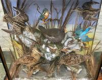 Taxidermy Edwardian Case of 7 Birds Inc: Kingfisher, Snipe, Moorhen & Woodcock (8 of 15)
