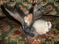 Quirky Taxidermy Item--Miniature Squirrels