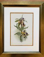 Stunning 'Fritillaria' Chromolithograph. Henry G Moon. 1903 (4 of 4)