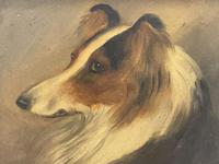 Pair of Scottish 19th Century Oil Paintings Rough Collie Dog Portraits After George Washington Brownlow (11 of 49)