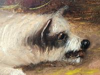 Pair of Victorian 19th Century Oil Paintings Terrier Dogs Ratting Signed J Langlois (21 of 35)