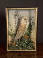 Decorative Cased Taxidermy Barn Owl (6 of 10)