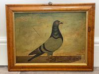 Decorative Sporting Early 20th Century Oil Canvas Painting English Racing Pigeon (2 of 35)