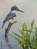 Oil on Canvas Study of a Kingfisher Listed Artist Geoffrey Campbell Black (10 of 10)