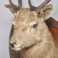 Taxidermist Deer Head (3 of 4)