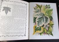 1872 The Ivy  A Monograph Comprising The History Etc Of The Plant By Shirley  Hibberd  1st Edition (4 of 6)