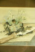 Snowdrops Still Life Watercolour (6 of 9)
