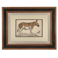 Hand Coloured 'Kiang' Lithograph. Goldsmith 1875 (4 of 4)