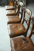 6 William IV Walnut Dining Chairs (7 of 9)