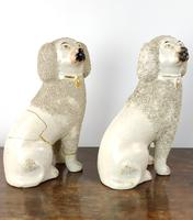 Two Decorative 19th Century Staffordshire Poodles (8 of 9)