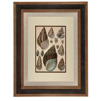 Hand Coloured 'Seashells Two' Lithograph. Goldsmith 1875 (4 of 4)