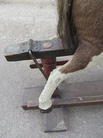Rare 19th Century Rocking Horse (6 of 16)