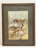 Ornithological Watercolour Finches Birds Study by Florence Barlow Royal Doulton (3 of 40)