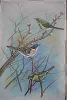 Set of Three Early 20th Century Silk Bird Paintings (6 of 10)