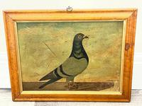 Decorative Sporting Early 20th Century Oil Canvas Painting English Racing Pigeon (30 of 35)