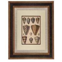 Hand Coloured 'Seashells One' Lithograph. Goldsmith 1875 (4 of 4)