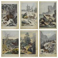 6 Framed Animal Coloured Pictures Plates C1877 Sketches From Nature - N Europe & Lapland (10 of 11)