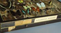 Large Antique Specimen Butterfly & Insect Case (2 of 9)