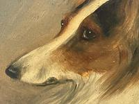 Pair of Scottish 19th Century Oil Paintings Rough Collie Dog Portraits After George Washington Brownlow (12 of 49)