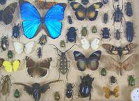 Good Antique Butterfly & Insect Specimens Collection (2 of 7)