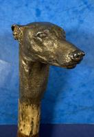 Late Victorian  Birch Greyhound Walking Stick (2 of 21)